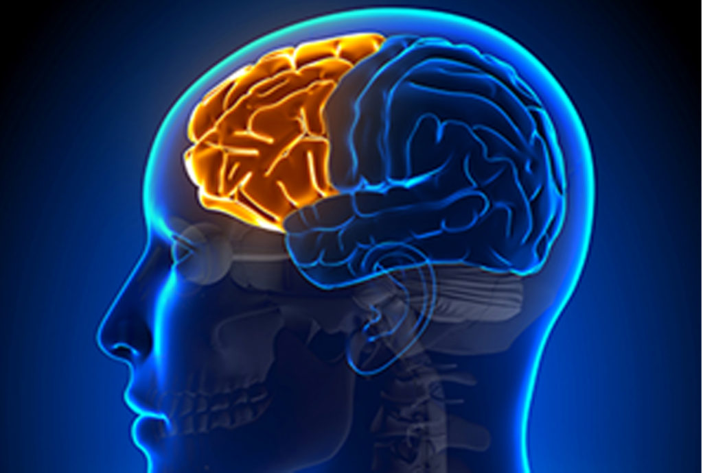Prefrontal Cortex   The Science of Psychotherapy